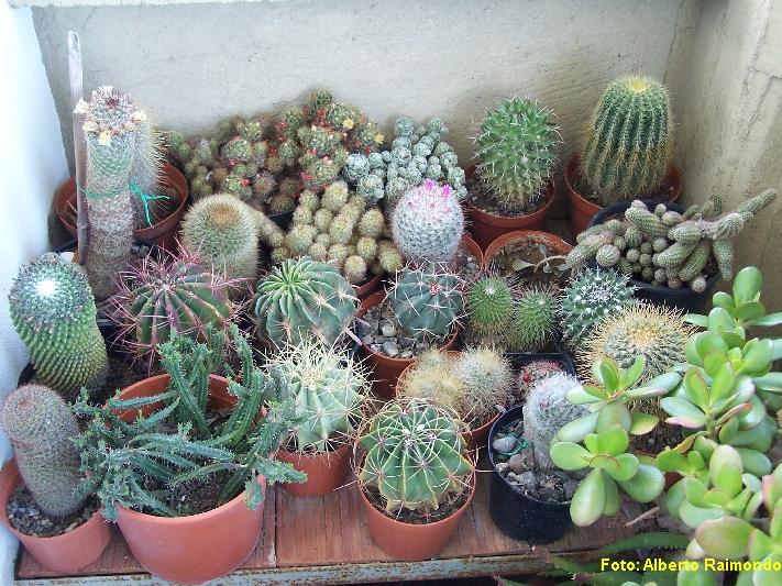 piante da collezione